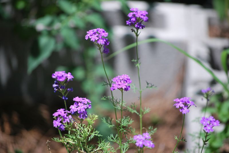 In the garden 3